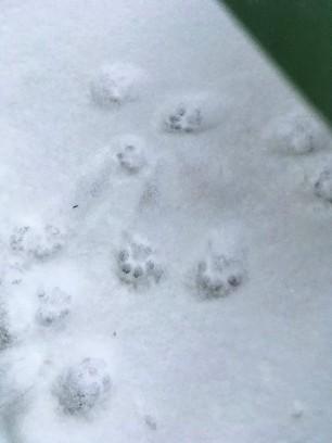 footprints (2)